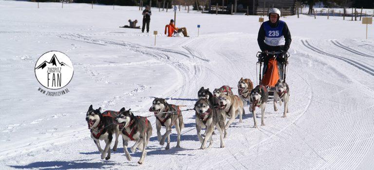 Internationales Schlittenhunderennen in Wallgau