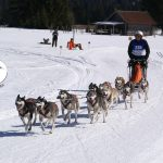 Internationales Schlittenhunderennen in Wallgau